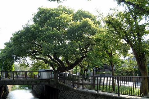 駅から2本の樹