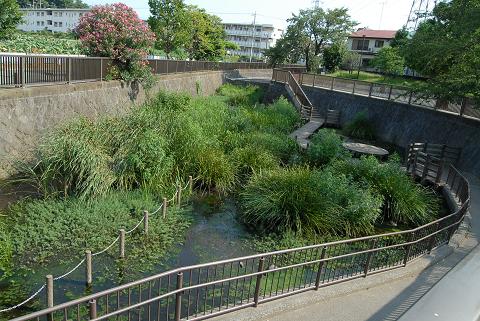 白子川の源流にある池