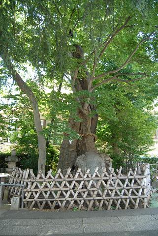 2階の樹2