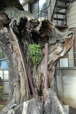 幹が枯れている様子