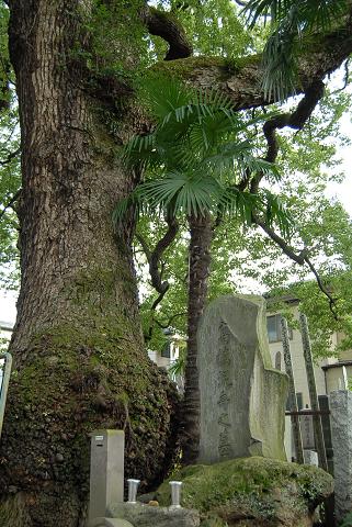 高橋泥舟(たかはしでいしゅう)の墓