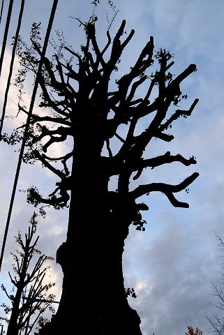 葉のない樹