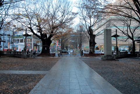 馬場大門の並木