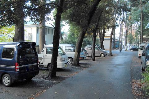 駐車場に立つ樹の「様子