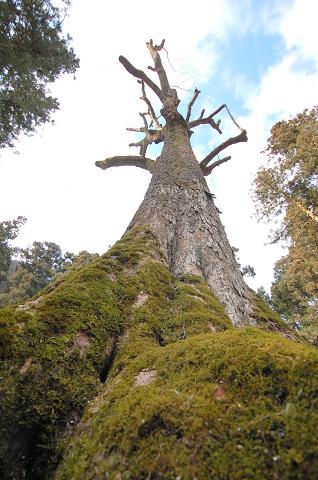 樹を根元から眺める