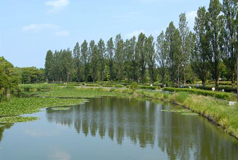 水面に映るポプラ並木