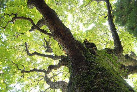 樹勢旺盛な様子