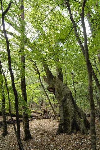 麓に向かって枝葉を伸ばしている様子