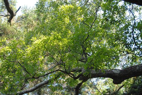 元気な枝葉の様子