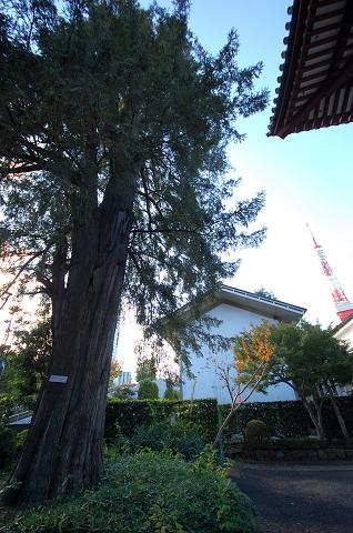 カヤと東京タワー