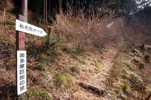 樹へのアクセス路