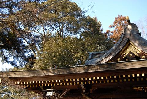 枝葉が屋根にまで伸びている様子①