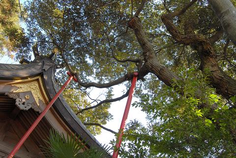 枝葉が屋根にまで伸びている様子②