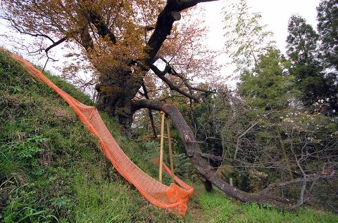 折れた枝全景