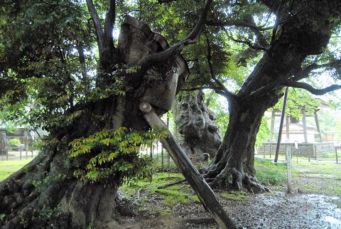 3本の樹の様子
