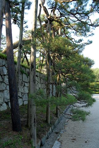 懸崖の様子