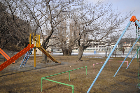宮古逆さ銀杏と公園