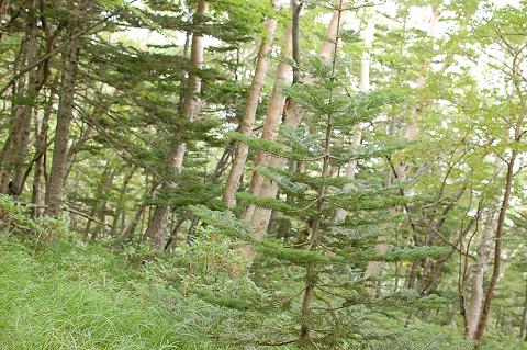 reseize201308富士山 055