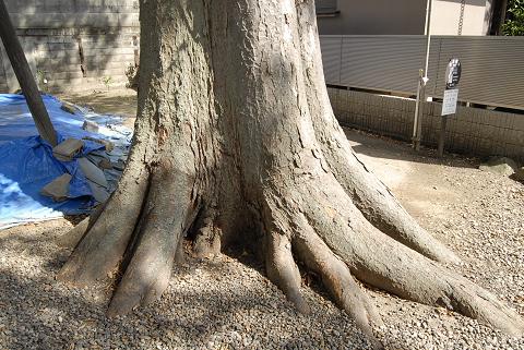 reseizeどっしりとした根