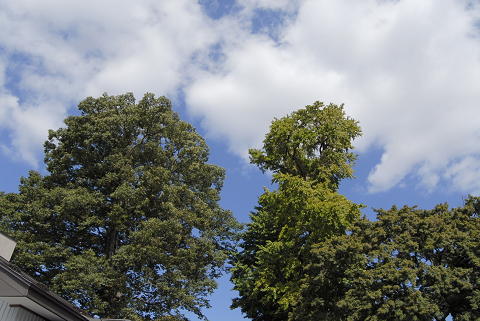 reseize2本の樹