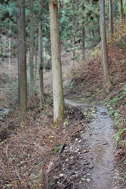 陣馬山・高尾山縦走ブログ用 (11)