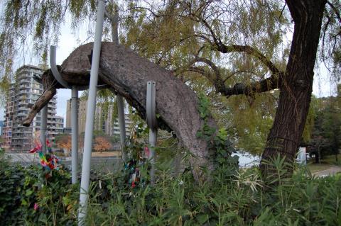 W480Q75_枯れ死と現在の木の様子