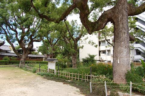 境内に立つ巨樹の数々