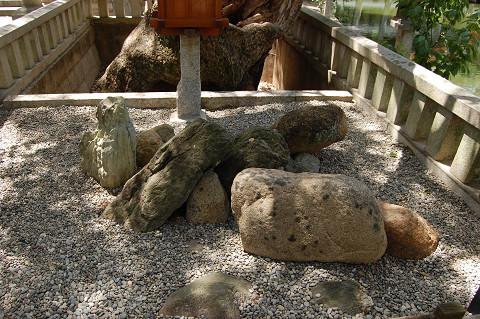 誕生石そばのクスノキ
