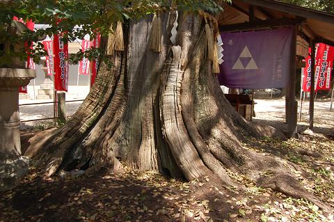 楠珺社と本殿の道中に立つクスノキ